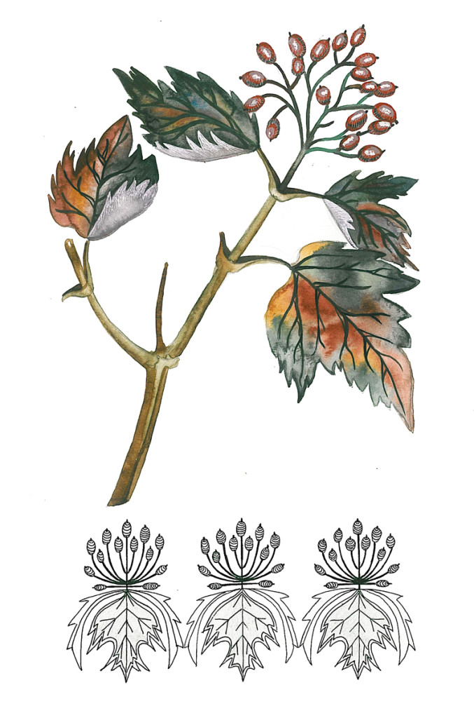 """Viburnum"". Stylization of natural element, watercolor & rapidograph"